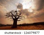 baobab tree | Shutterstock . vector #126079877