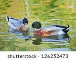 teal in water. | Shutterstock . vector #126252473