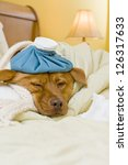 Sick dog in bed with water bottle and tissue. - stock photo