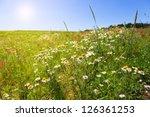 Flower Summer Field