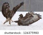 buzzard fight | Shutterstock . vector #126375983