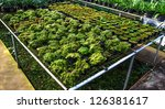 plant of lichen and moss | Shutterstock . vector #126381617