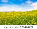 Beautiful Tuscany Landscape...
