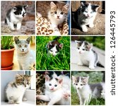 collage of funny kitten | Shutterstock . vector #126445793