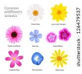 lino azul,colores,margarita arrastramiento,flores de la margarita,flores,ilustración,lanza hoja coreopsis,gloria de mañana,coneflower púrpura,primavera,flores silvestres,margarita amarilla