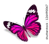 Pink Butterfly Flying  Isolate...