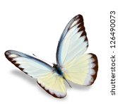 Stock photo white butterfly flying isolated on white background soft shadow underneath 126490073