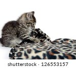 Stock photo cute tabby kitten playing with animal print blanket on white background 126553157