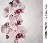 A delicate pink orchid on faded vintage style background, with space for your text - stock photo