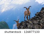 Mountain Goats In The Western...