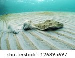 flounder swimming underwater in ocean - stock photo