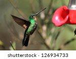 tyrian metaltail  metallura... | Shutterstock . vector #126934733