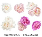 set of peonies flower isolated... | Shutterstock . vector #126965933