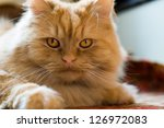 cute red cat brazen lying on the floor - stock photo