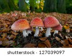 Red Amanita Muscaria In An...