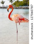 Pink Flamingo Standing On The...