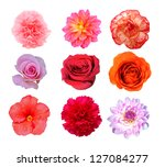 nine mix flower isolated on... | Shutterstock . vector #127084277