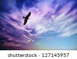 bird of prey fly in sky   black ... | Shutterstock . vector #127145957