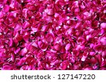 many red rose petals background - stock photo