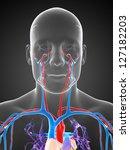 3d rendered illustration of the ... | Shutterstock . vector #127182203