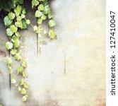 Green Creeper  Vine Grape ...