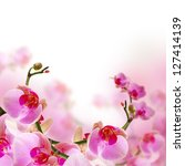 Flowers, blossom summer background with beautiful pink orchid - stock photo