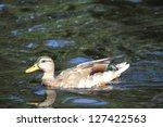 cruising | Shutterstock . vector #127422563