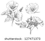 hand drawn flowers | Shutterstock . vector #127471373