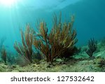 Beautiful underwater seascape with gorgonia - stock photo