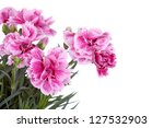 pink carnation flowers on white ... | Shutterstock . vector #127532903