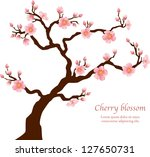 Sakura tree blooming isolated on white. Vector - stock vector