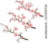 Blooming Cherry branches in 3 different stages. Vector - stock vector