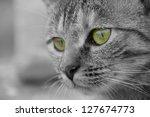 Closeup Of Cat Face With Green...