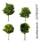 four trees collection isolated... | Shutterstock . vector #127851077