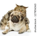 the cat hugs a dog. isolated on ...   Shutterstock . vector #127856363