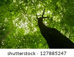 forest trees. nature green wood ... | Shutterstock . vector #127885247
