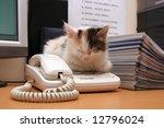 Stock photo cute kitten sleeps on the desktop 12796024
