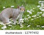 squirrel 1 | Shutterstock . vector #12797452