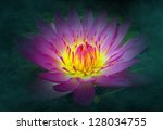 A radiant lotus flower emerges from a dark murky pond - stock photo