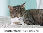 A sleeping cat over a white carpet - stock photo