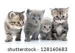 Stock photo portrait of group of young scottish cats studio shot isolated 128160683