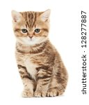 Stock photo one british shorthair brown kitten cat isolated 128277887