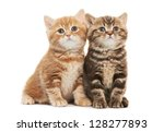 Stock photo two british shorthair brown and red kitten cat isolated 128277893