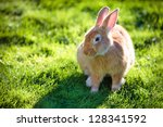 Easter rabbit on fresh green grass - stock photo