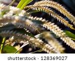 Wafting Grass Seeds. Grass...