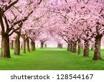 ornamental garden with... | Shutterstock . vector #128544167