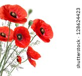 Poppy flowers isolated on a white background - stock photo