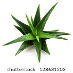 aloe vera plant isolated on... | Shutterstock . vector #128631203