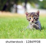 Stock photo a kitten plays in the backyard of a home 12869938