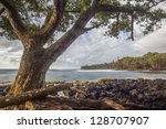 Tree On A Rocky Beach In Big...